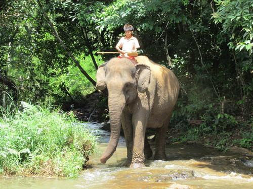 éléphant mondolkiri cambodge