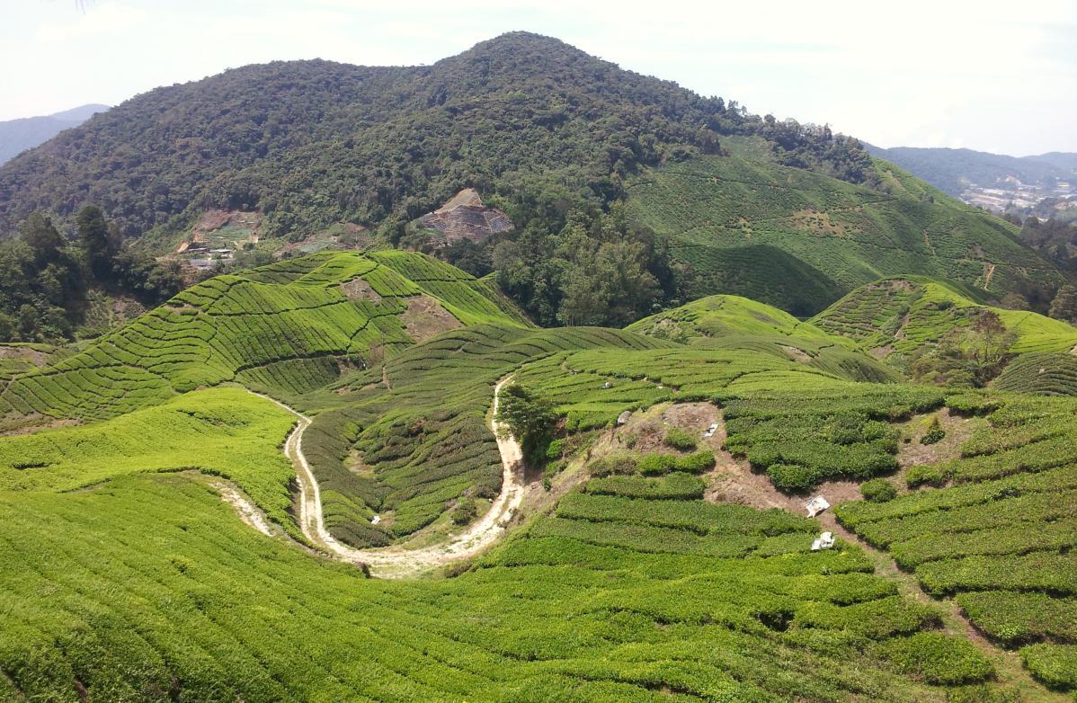 voyage autostop malaisie
