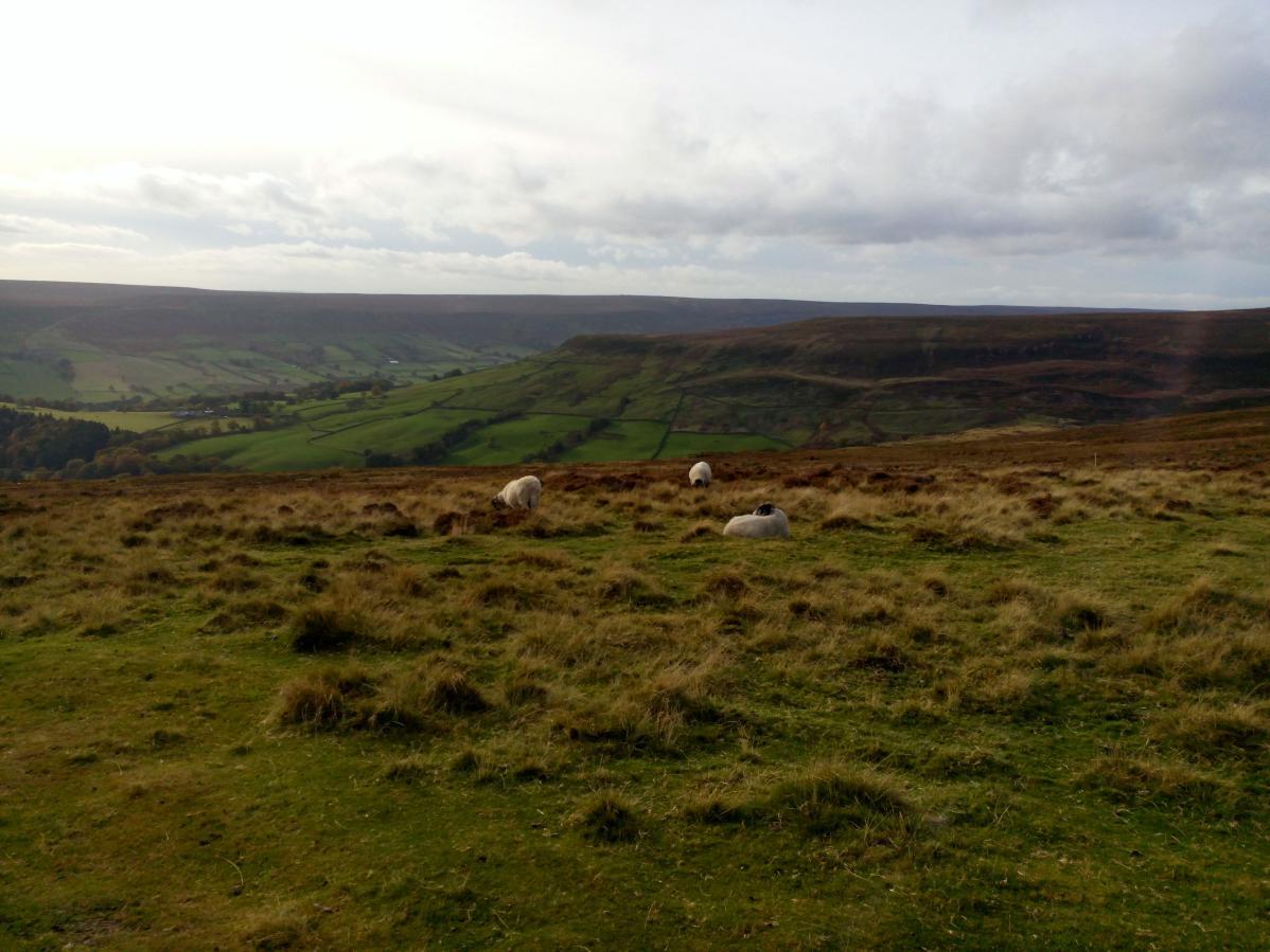 Road trip en van au Royaume-Uni #1 – L'Est de l'Angleterre