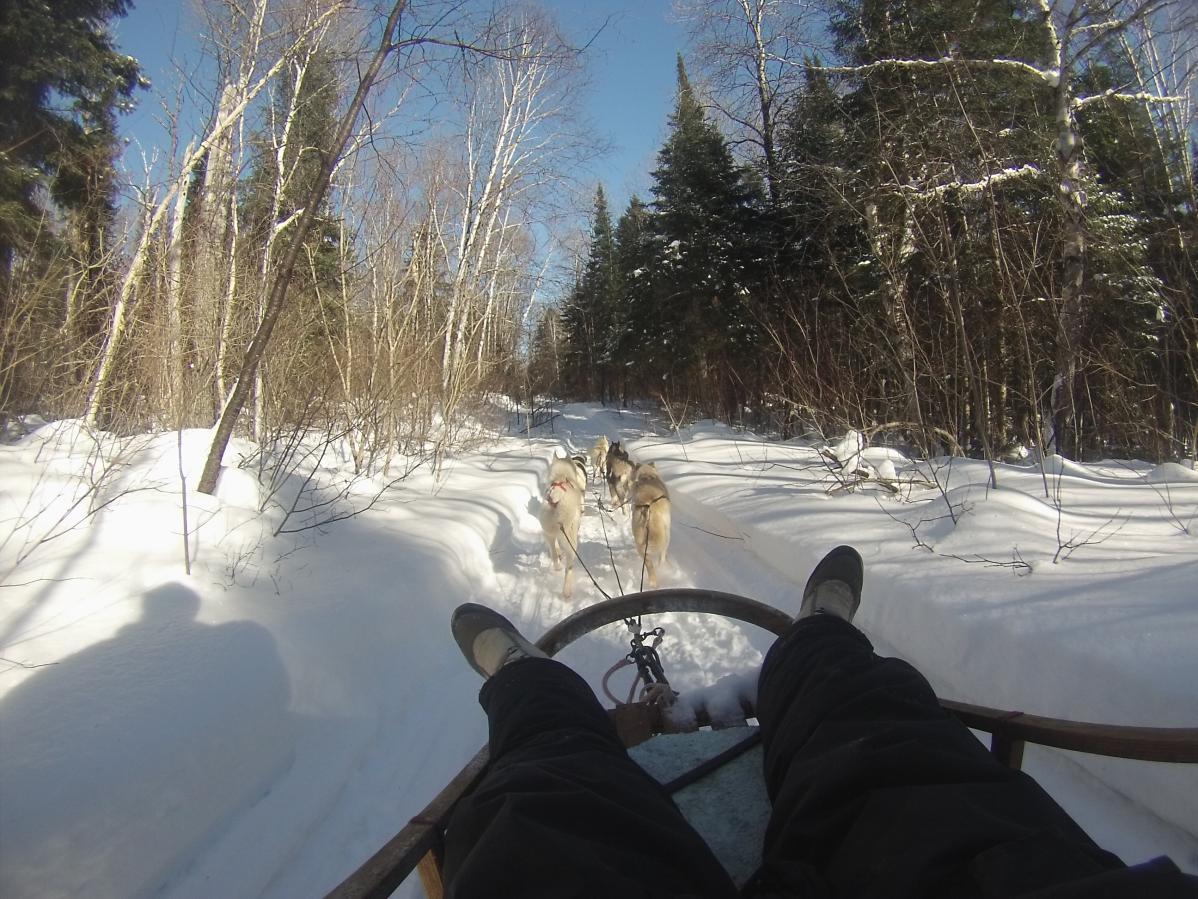 WWOOFING chez une éleveuse de chiens de traîneau, au Québec