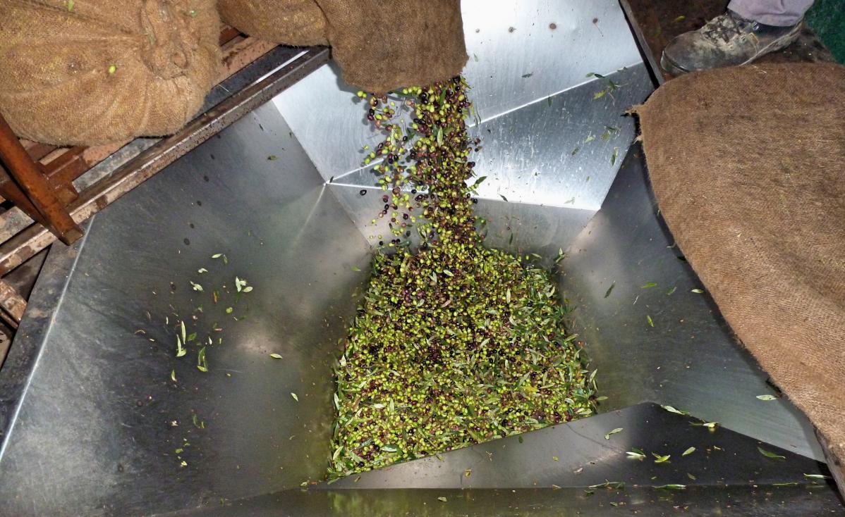 Faire de l'huile d'olive en grèce