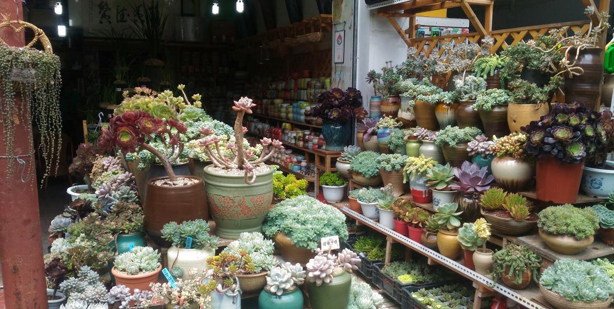 visiter kunming yunnan