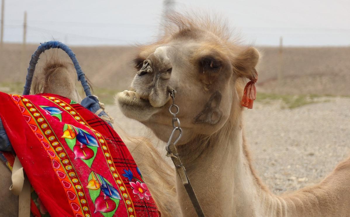 Ma traversée du désert de Gobi en stop, de Shikong à Ürümqi