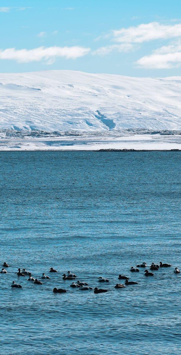 La Baie d'Holmavik, au Nord de l'Islande