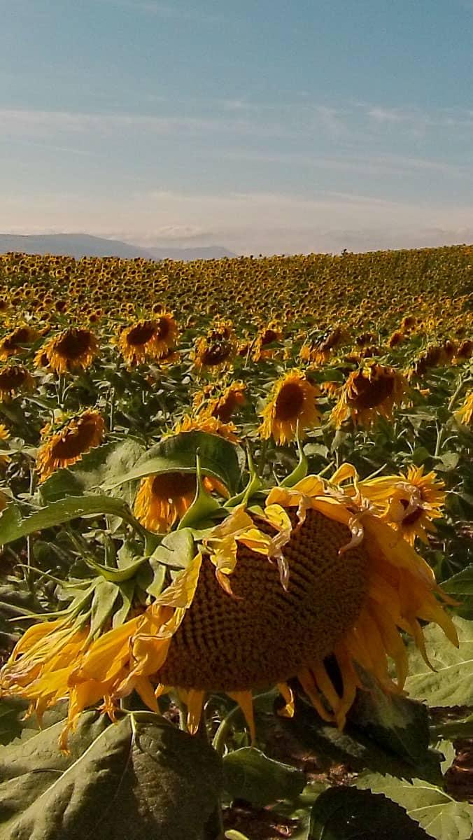 Récit de mon aventure sur le Chemin de Compostelle Espagnol (Camino Frances) : un pèlerinage de 800km, ou les plus beaux jours de ma vie... | Histoires de tongs, le blog voyage passionnément alternatif