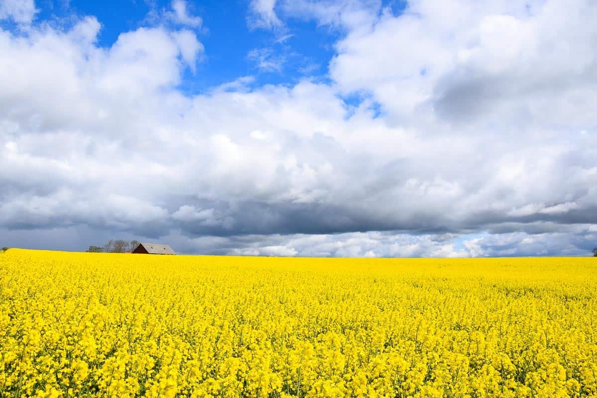 droit à la nature suédois