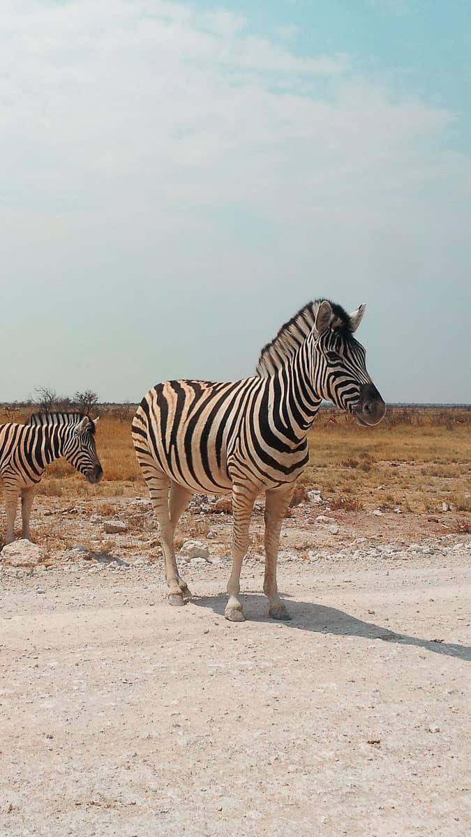 voyager en solo en afrique en sac à dos
